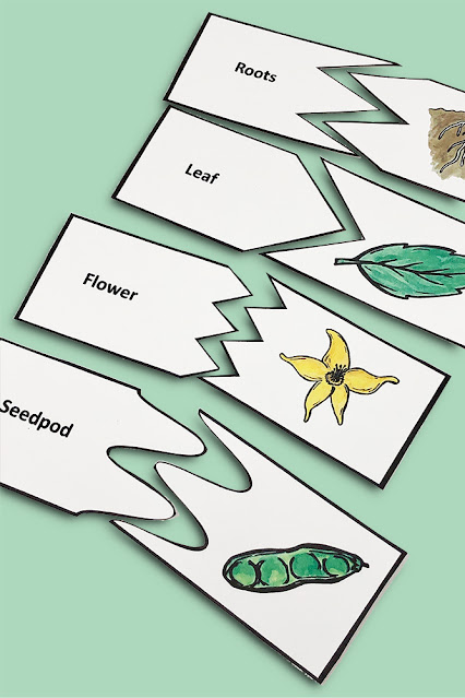 Living Things and What They Need Kindergarten
