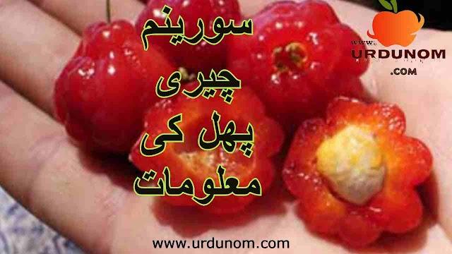 سورینم چیری پھل کی معلومات | Suriname cherry fruit information in urdu