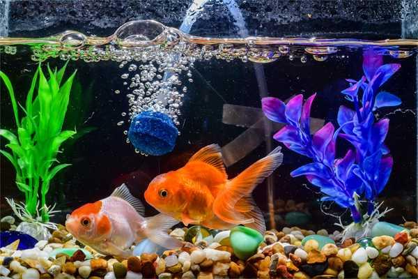 Hal-Hal Yang Harus Diperhatikan Ketika Beternak Ikan