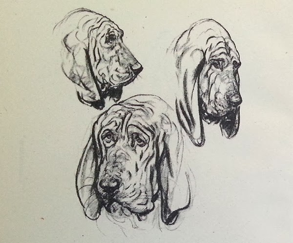 An illustrators life for me how to draw dogs as well as her lovely drawings there are some good tips such as how to cope with drawing a constantly moving subject use ccuart Images