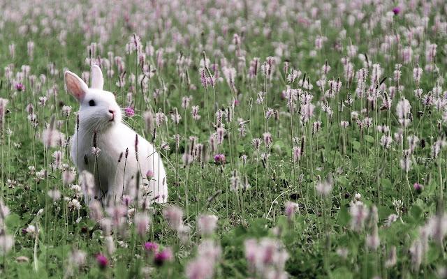 Foto wit konijn tussen de bloemen