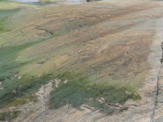 Algues diverses de la côte nord du fleuve Saint Laurent