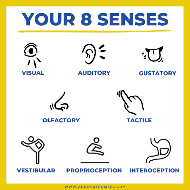 What are the 8 sensory systems?