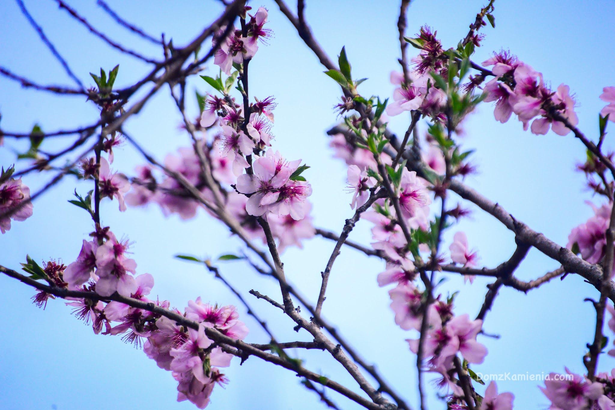 Wiosna w Toskanii, blog Dom z Kamienia