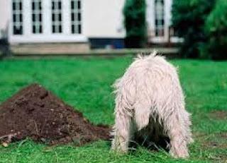 Γιατί σκάβουν οι σκύλοι;