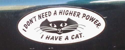 Funny atheism bumper sticker - I don't need a higher power i have a cat
