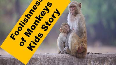 Foolishness of Monkeys Kids Story