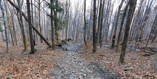 Ostrzejszy fragment zejścia z Bujakowskiej Góry.