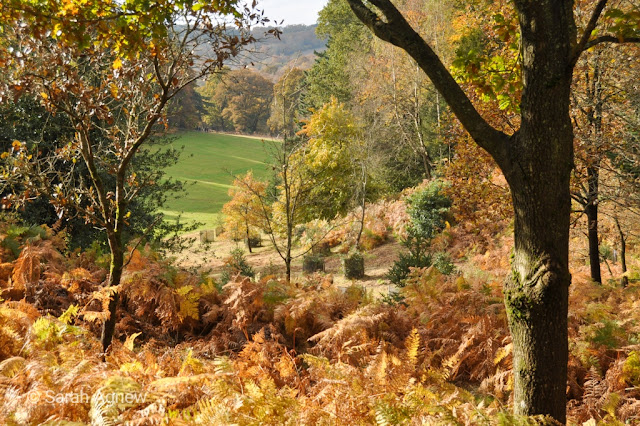 Autumn colours at Wakehurst in Sussex, photos by Sarah Agnew Modernbricabrac