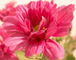 flores, alergía, naturopatía