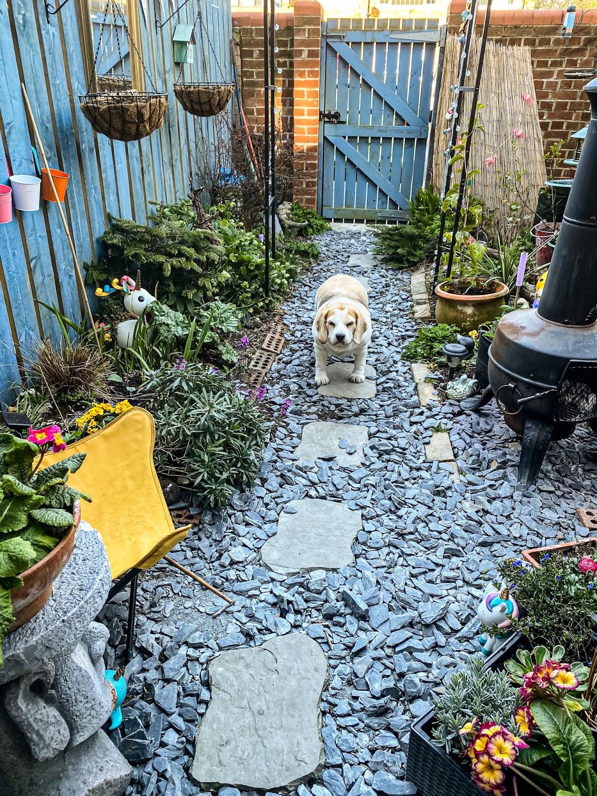 Magical Small Garden Ideas Mandy Charlton Photographer Writer Blogger