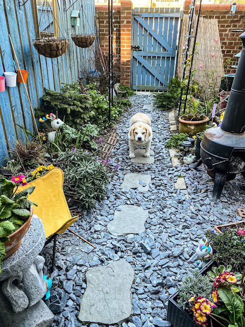 Magical small garden ideas, mandy charlton, photographer, writer, blogger, gardening, small urban spaces