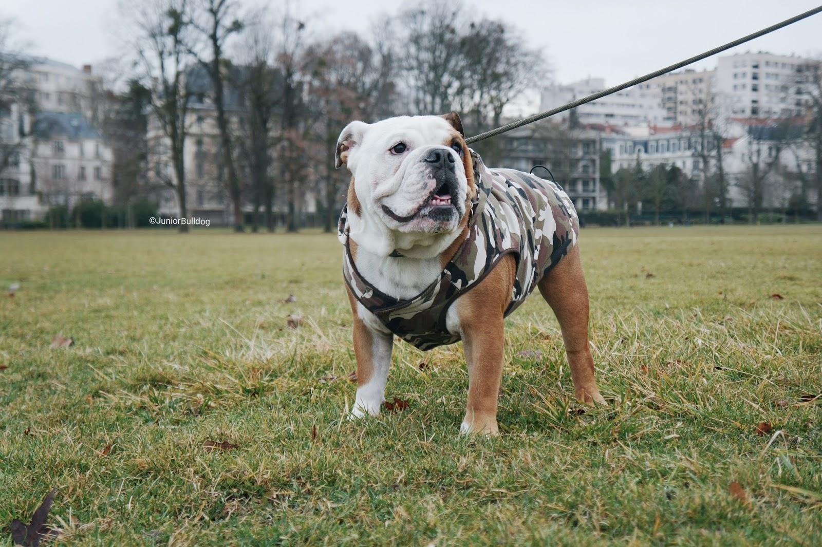 Forbouleonly for boule only FBO manteau chien bulldog anglais