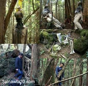 غابة الانتحار فى اليابان-غابة أوكيغاهارا اليابانية