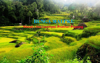 Download Lagu Toraja Bunga Mali'ku (Ivo Lestiani Pratiwi Payung)
