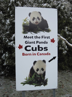 Meet The First Giant Panda Cubs Born In Canada.