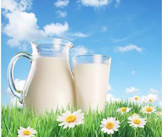 Sữa bò và sữa dê không thể thiếu khi bạn muốn tăng cân nhanh