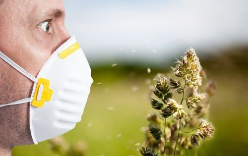 Какие растения вызывают аллергию?