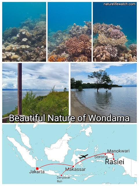 vacation trip to wondama bay of west papua