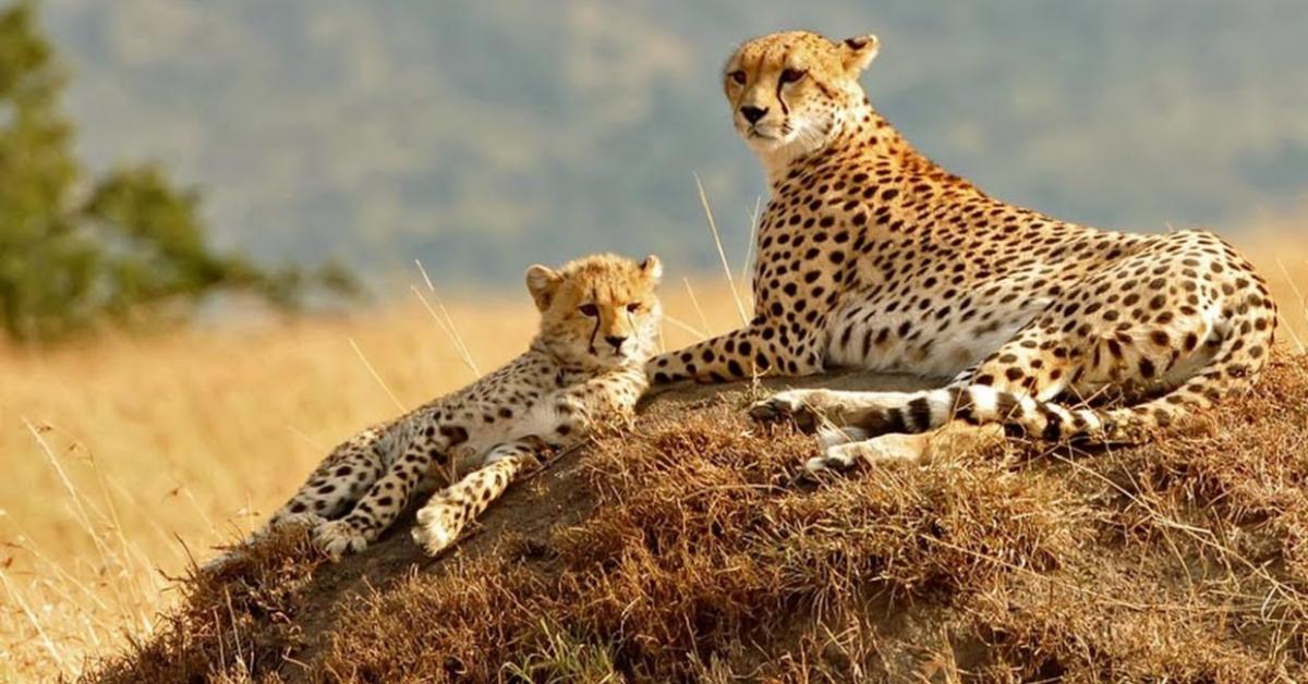 Serengeti National Park 3