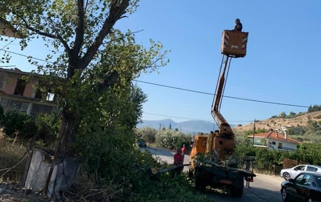 Κλαδεύουν τα επικίνδυνα για πτώση δέντρα στο Άργος