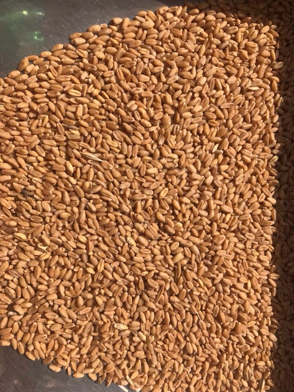 Feed Grain Agri Brokers: PAKISTAN ORIGIN MILLING WHEAT SPECIFICATION