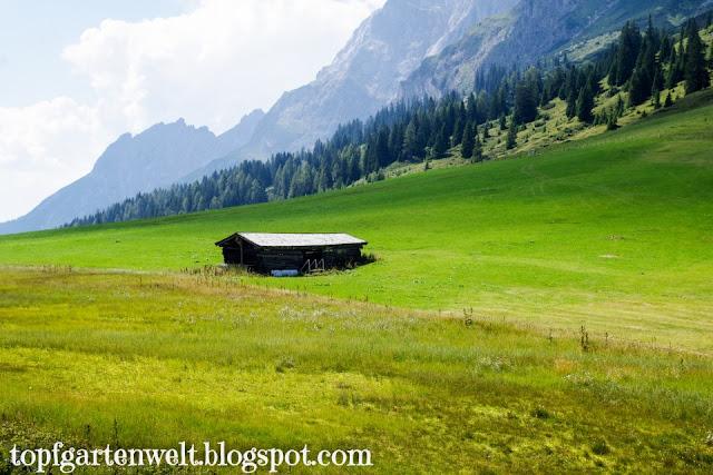 Almwiese am Hochkönig | Kinderwagenwanderung | Tennengau - Blog Topfgartenwelt