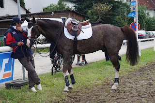 A dark roan horse with a white blaze being held by a groom outside a show jumping competition waiting to be ridden.