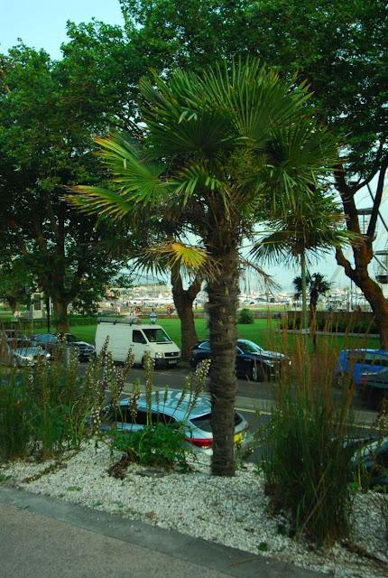 palma w Torquay