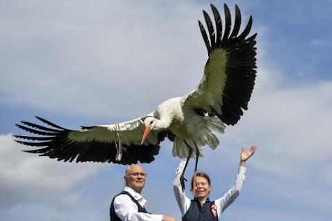 Kokárdával repültek a gólyák