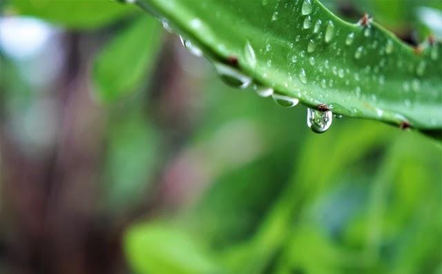 Το φύτεμα έξτρα δέντρων θα αυξήσει τις καλοκαιρινές βροχές και στη νότια Ευρώπη