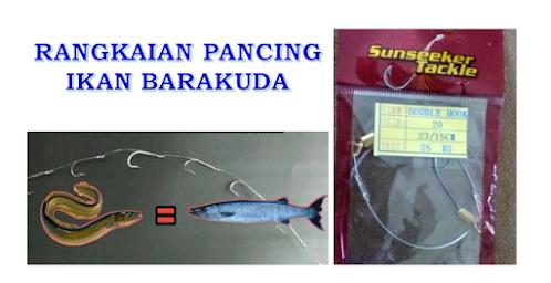 umpan mancing ikan barakuda, rangkaian pancing ikan barakuda, kail untuk ikan barakuda, leader untuk ikan barakuda