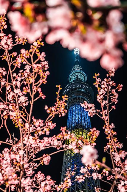スカイツリー,東京スカイツリー,桜,前ボケ