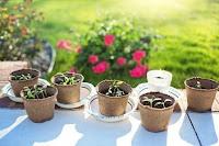 bisnis bibit tanaman, usaha bibit tanaman, usaha buah-buahan, bibit tanaman, rincian biaya modal usaha bibit tanaman, modal bisnis bibit tanaman