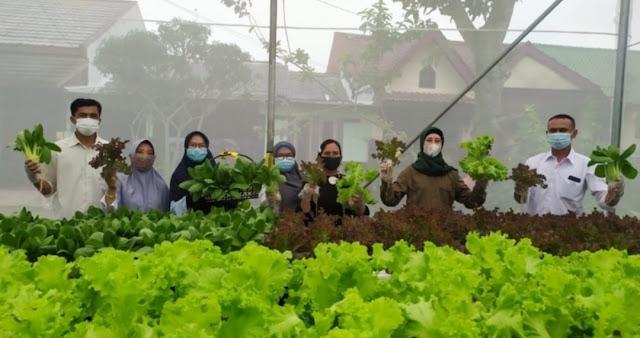 Hidroponik dan Aquaponik, Solusi Pertanian Kota