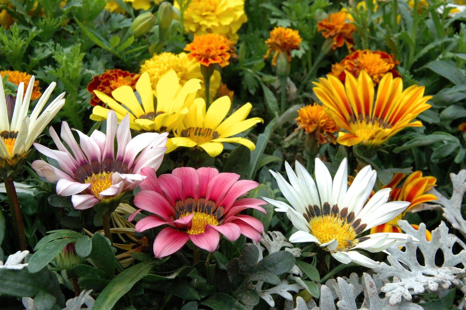 SLUG RESISTANT BEDDING PLANTS The Garden of Eaden