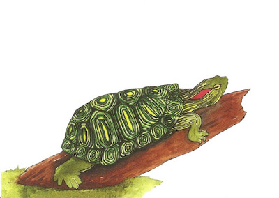 Watercolor Turtle Painting or Postcard