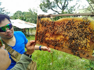 تحدي صورتك مع النحل