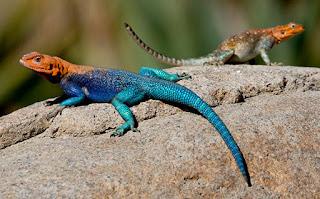 सपने में छिपकली काटने का मतलब ▷ Lizards