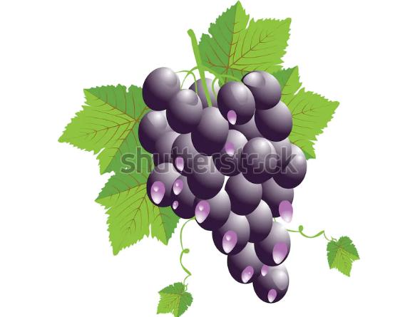 illustration free grape