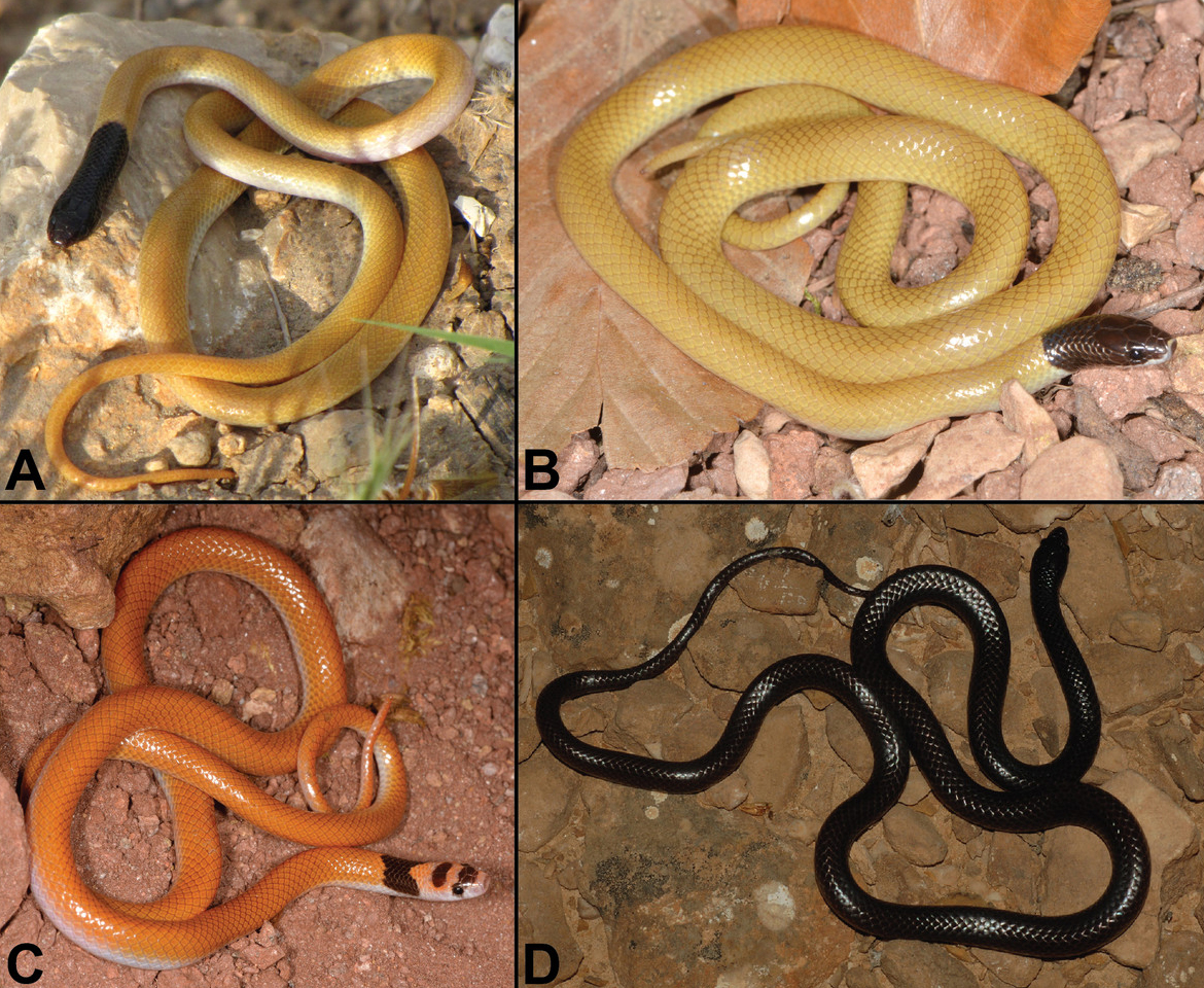 snake research paper
