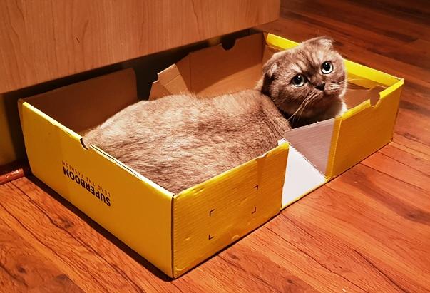 Luna and the Tiosebon shoe box