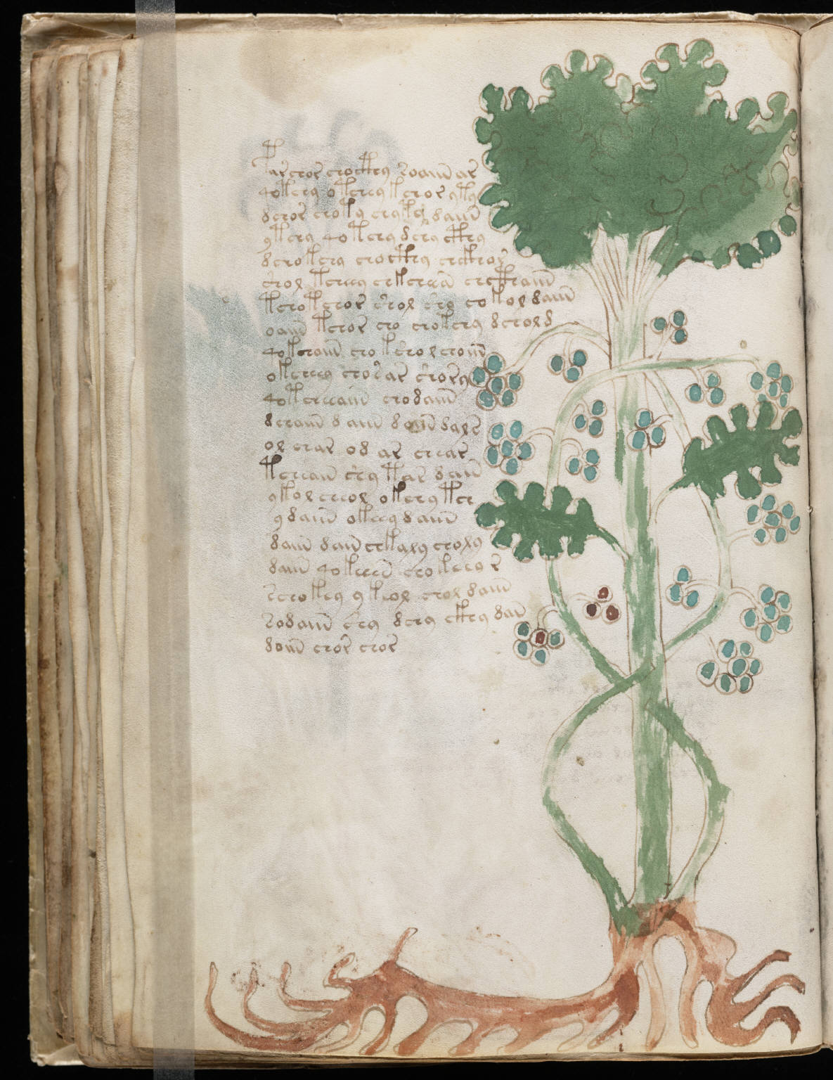 manuscrito068