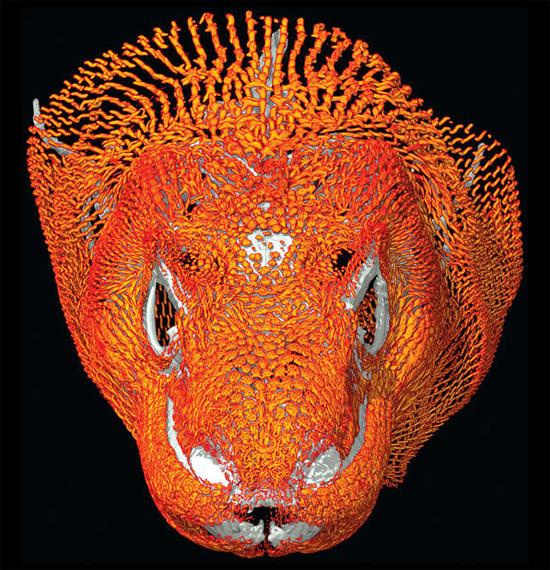 Dragões de Comodo têm armadura de malha de ossos sob a pele revelada pela primeira vez
