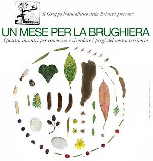 http://brianzacentrale.blogspot.it/2016/10/un-mese-per-la-brughiera.html