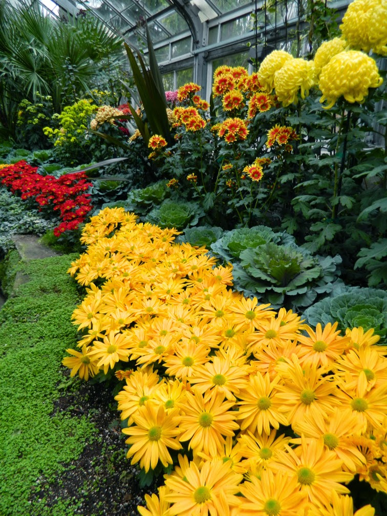 Allan Gardens Conservatory Fall Chrysanthemum Show 2014 orange mums by garden muses-not another Toronto gardening blog