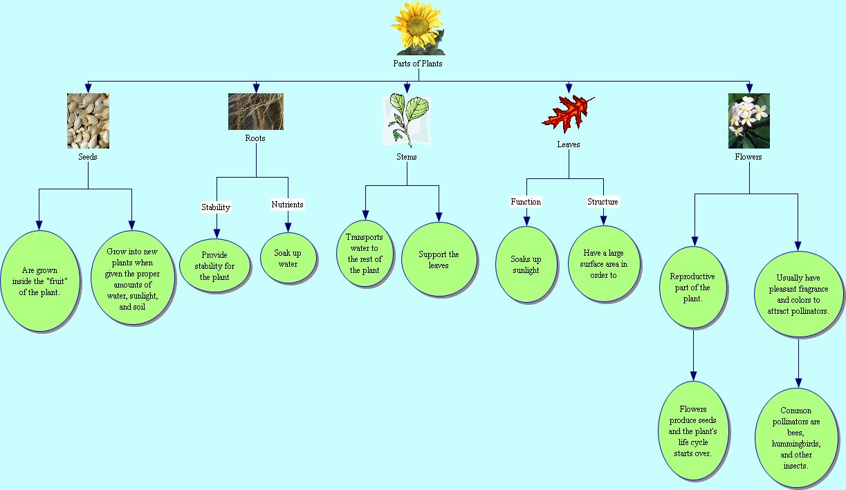 Flower Concept Map.It 365 G002 Summer Parts Of Plants Concept Map