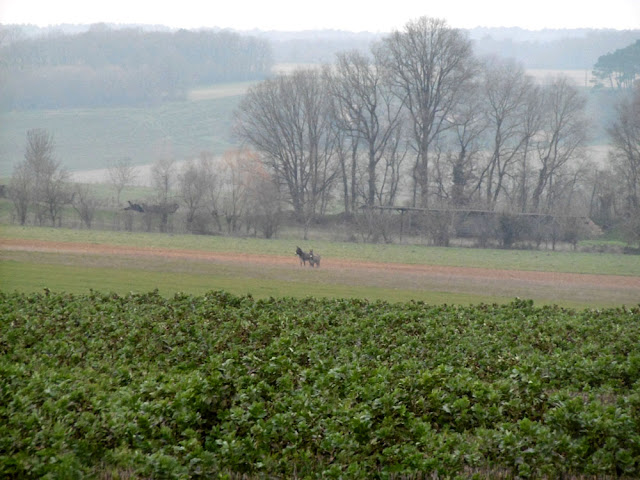 Two donkeys in a winter landscape.  Indre et Loire, France. Photographed by Susan Walter. Tour the Loire Valley with a classic car and a private guide.