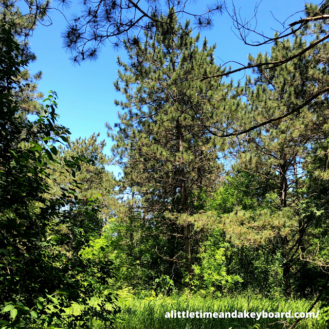 A pine forest greeted us at Kettle Moraine State Forest.