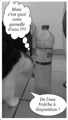 Un chat qui voulait boire à la bouteille.